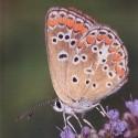 Ivan Pancic-Leptiri katalog 1-4 str m